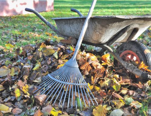 Ramasser les feuilles mortes ou pas?
